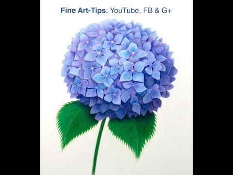 Hydrangea flower drawing tutorial by leonardo pereznieto
