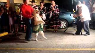DOG DANCING SALSA Video