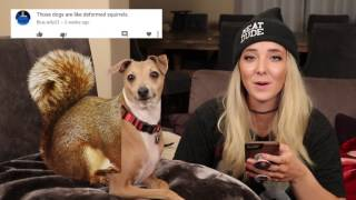 Video's up: Reading Mean Comments About My Dogs