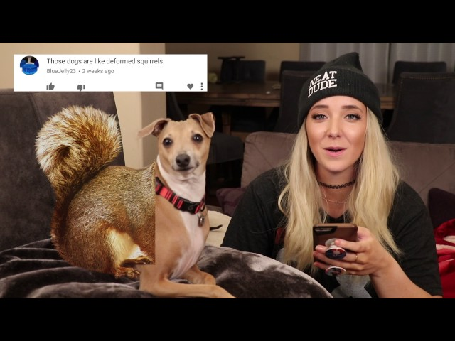 Reading Mean Comments About My Dogs
