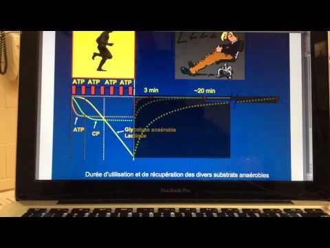 La fréquence des entraînements dans le bodybuilding