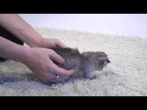 Katzentipps - Thema: Katzenmilch, Kittenmilch, Royal Canin Babycat Milk mit Icie
