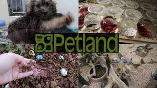 HOW DOES PETLAND CARE FOR THEIR ANIMALS?