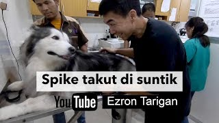 Video SPIKE TAKUT DI SUNTIK - Ezron Tarigan & Humble Spiker MP3, 3GP, MP4, WEBM, AVI, FLV September 2019