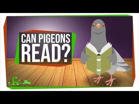 , title : 'Can Pigeons Really Read