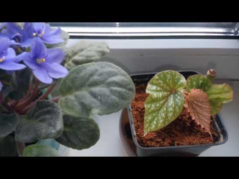 Безопасные комнатные растения для домашних питомцев