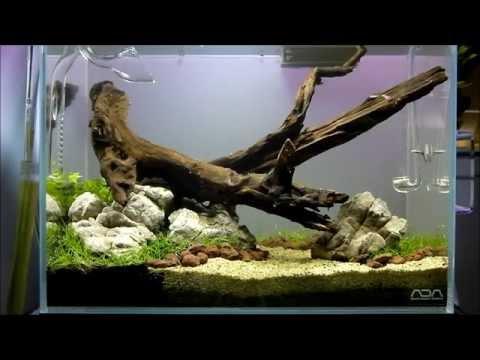 peHa:68 - ADA Cube Garden Mini M - Planted Aquarium