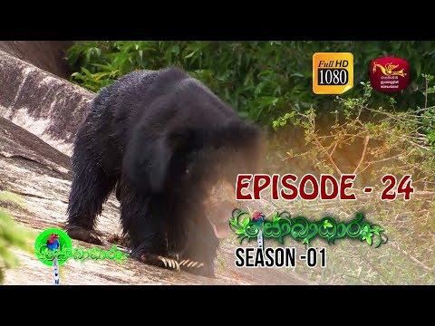 Sobadhara  | Season - 01 | Episode 24 | Sobadhara Rupavahini