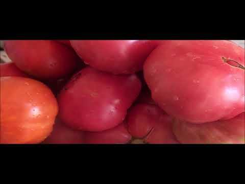 Консервируем ВКУСНЕЙШИЙ салат из помидоров, перца, лука и моркови