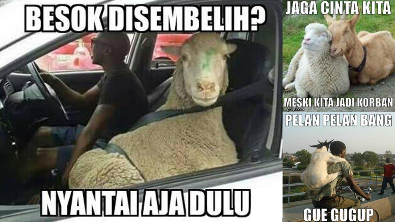 Kumpulan Meme Lucu Hewan Bahasa Jawa