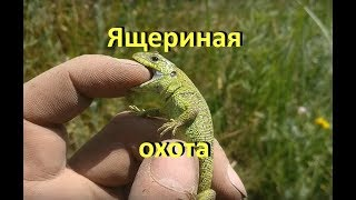 Как поймать прыткую ящерицу в подмосковье