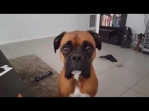 Кажется мой пёс на что-то намекает)))