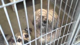 Lancaster Shelter, CA - 11/2/10 ~~ Adopt a Dog!