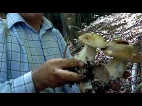 Liquido per eliminazione di una posizione di fungo