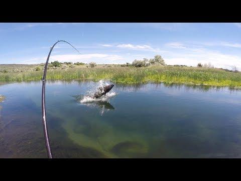 Størfiskeri fra kajak i en lille å 2017 afsnit 2