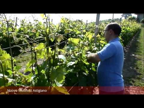 Mollificio Astigiano: gestire la vegetazione con le molle