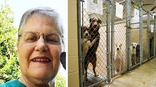Woman Asks Shelter For Oldest, Hardest To Adopt Dog That No One Wants  Here's Who They Gave Her
