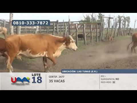 Lote Vacas en Las Tunas (Entre Ríos)