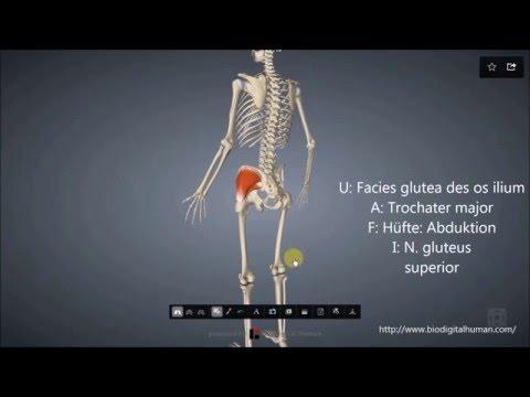 Vitaminpräparat für die Behandlung von Osteochondrose