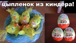 Цыплята без инкубатора из киндеров! #киндер