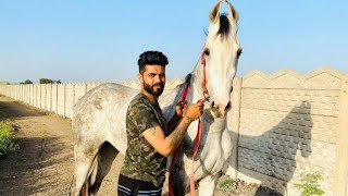 Ravindra Jadeja shows off his horse at farm house during the coronavirus lockdown