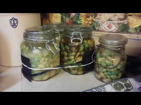 , title : 'Fermented Garlic Update and a look at my Fermenting Corner
