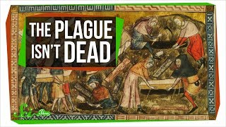 Could the Plague Rise Again? - Video Youtube