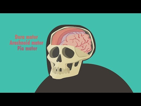 Edu: Что происходит при сотрясении мозга