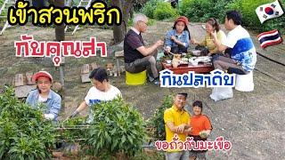 เข้าสวนเก็บพริกกับคุณสา EP.202 กินปลาดิบใต้ต้นไม้ บ้านๆสบายๆในครอบครัว/สะใภ้เกาหลี by Korean