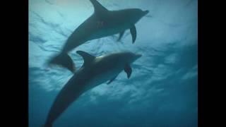 ATARAXIA - Dolphins / Lost Atlantis