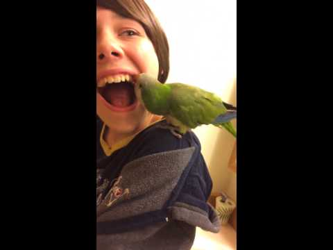A parrot pulls this kid's tooth