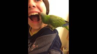 Parrot pulls my tooth