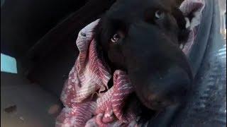 Спасаем жизнь собаке