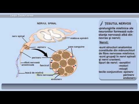 Dureri articulare în bolile infecțioase