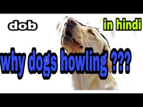 Why Dogs Howling ??? In Hindi || Dob ||