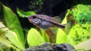 Fish Feeding Gone Wrong (Live Bluegills)