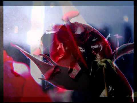 LeAnn Rimes   The Rose lyrics