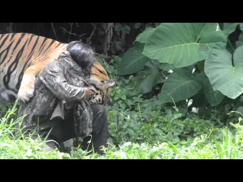 Indonesian Man Become Best Friend With Bengal Tiger