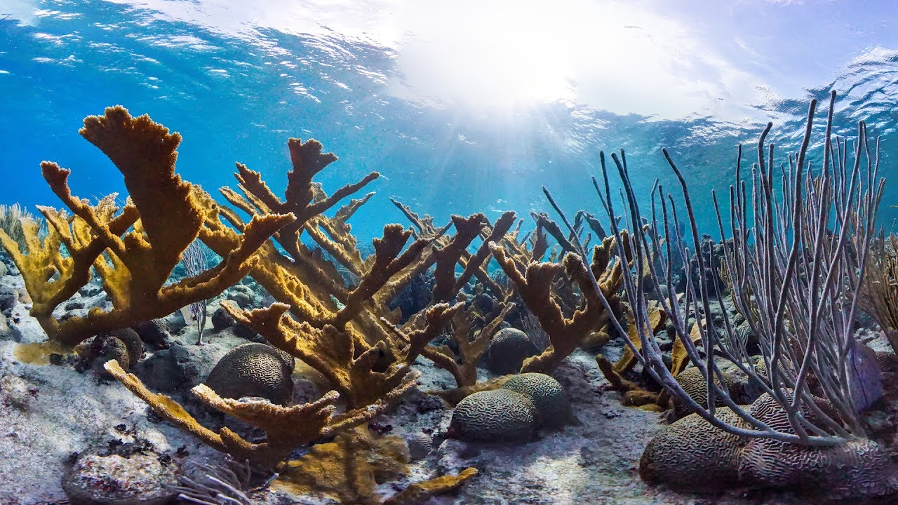 'Chasing Coral' Brings Dying Reefs to Life (VIDEO)