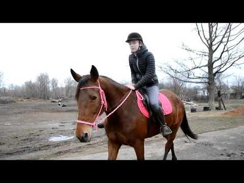 МОТ- Когда исчезнет слово / клип с моей любимой лошадью