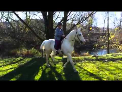 Irish, an adopted Tennessee Walker in Huntington, WV_image-1