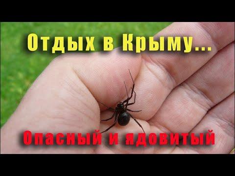 Какие опасности в Крыму поджидают туристов  Чего с