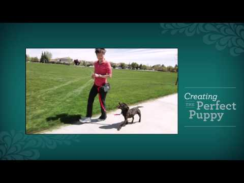 Creating the Perfect Puppy DVD