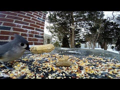 Bird Feeder cam