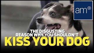 אאוץ': אחרי הסרטון הבא ככל הנראה כבר לא תנשקו את הכלב/ה שלכם בפה >>