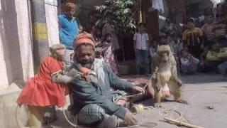Biwi ghar na  aana par monkey drama