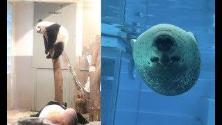 動物園でしか見れない動物たちの珍しい姿&仕草がじわじわ面白いw~Animalsthatcanonlybeseenatthezooisinteresting.