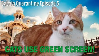 TRYING GREEN SCREEN WITH CATS! (Tiger King, The Office and More!) Cats In Quarantine, Episode 5