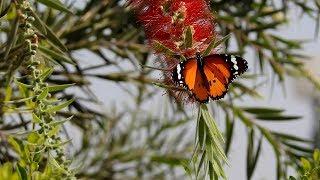 Wonderful Nature - Nikon Coolpix P900 - Zoom camera