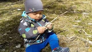 Tadzio i zjadanie lasu
